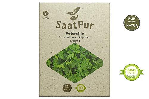 SaatPur Petersilie Samen, Saatgut für ca. 300 Pflanzen Glatte einfache Schnitt Peterle