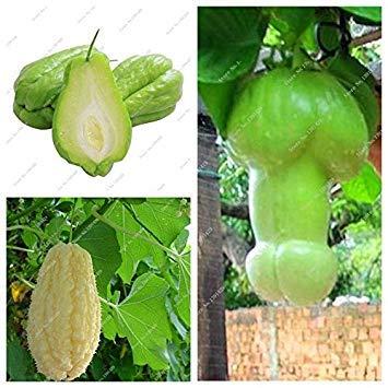 VISTARIC 20 graines/Pack, graines gardénia, balcon famille jardin de bonsaïs en pot, de belles graines de fleurs de brousse blanc