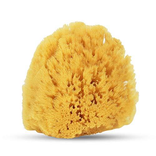 Baby Buddy(ベビーバディ) Natural Bath Sponge ナチュラルバススポンジ 天然海綿スポンジ【アメリカ製】 ソフト 1個 (x 1)