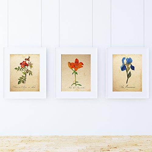 Pack de láminas MI JARDÍN Azul. Tres láminas tamaño A4. Posters con imágenes de botánica. Decoración de hogar. Láminas para enmarcar. Papel 250 Gramos