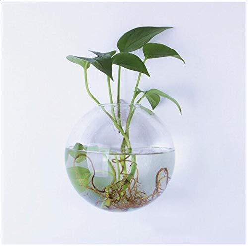 Wandmontage helder glas Terraria Hangende bloemenvaas Kamerplanten Plantenbakken Vaas Mini Aquarium Muurdecoratie