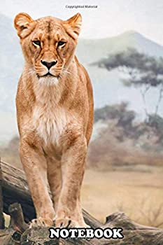 Notebook  African Lioness  Journal for Writing College Ruled Size 6  x 9  110 Pages