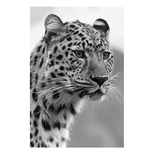 YABINGA Lienzo de Pintura de Leopardo de Animales africanos, imágenes artísticas Impresas, Carteles e Impresiones, decoración de la Sala de Estar del hogar (40x50 cm) sin Marco