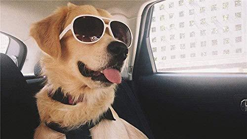 Zhyxia Rompecabezas de Rompecabezas 1000 Piezas para Adultos Perro Genial con Gafas de Sol Decoración Juguetes de Madera Juegos Divertidos Gran Regalo Educativo para niños