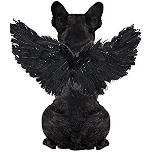 WeeH Pet Halloween Costume Cosplay Angel Devil Black White Wing for Dog Cat Rabbit Piggy – Funny Gift at Halloween Party Anime Theme Birthday Christmas