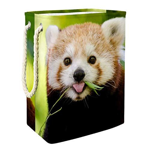 Vito546rton Cestas de lavandería con diseño de panda rojo de animal alto y resistente, plegable para adultos, niños, adolescentes, niñas en el dormitorio, cuarto de baño, 49 x 30 x 40 cm