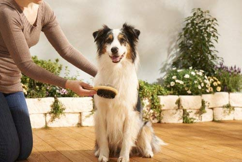 Bontoy Hunde Pflegeset 6-Teilig