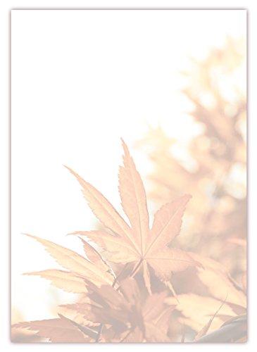 Motiv Briefpapier (Herbst-5034, DIN A4, 100 Blatt). Einseitig bedrucktes Briefpapier, sehr gut beschreibbar, Motivpapier für alle Drucker/Kopierer geeignet Motiv Herbst Laub Blätter