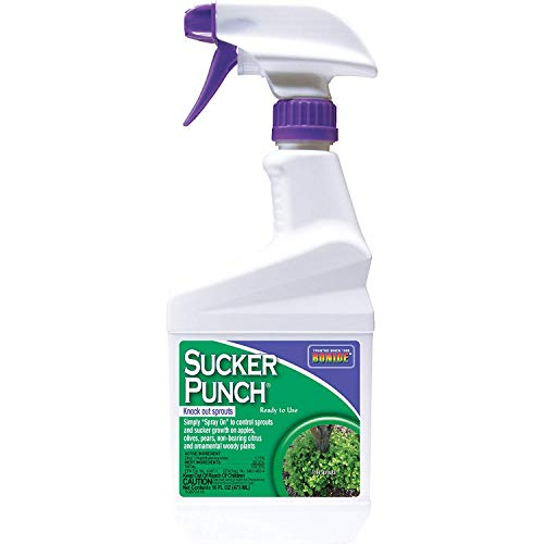 Bonide (BND2761) - Ready to Use Sucker Punch, Stop Suckers Sprouting from Roots and Pruning Cuts (16 oz.)