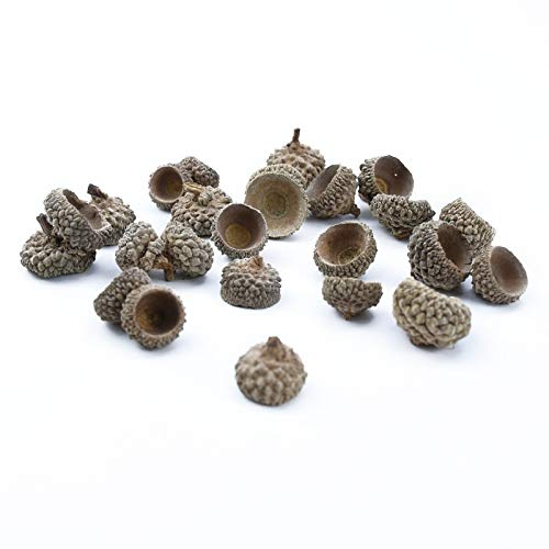 JINSUO Tdzz Dried Flowers 20pcs Natural Dried Flowers Pine Cone Acorn Artificial Flower for Home Christmas DIY Garland Wreath Wedding Decoration (Color : C)