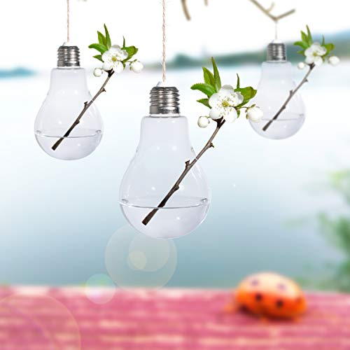 Bulb hanging glass terrarium