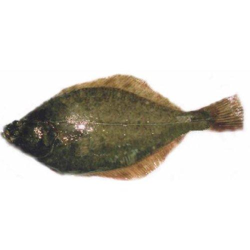 「活の神経〆カレイ」活魚お刺身用 鰈 20cm 【遊廊亭】