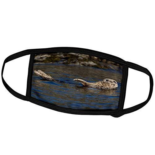 3dRose Harbor Seal, Katmai National Park, Alaska - US02 GPR0024 - Greg. - Face Covers (fc_87482_2)