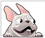 Biomar Labs® 1 x Vinilo Autoadhesivo French Bulldog Frances Perro Dog Pegatina para Coche Etiqueta Sticker Moto Ventana Puerta Casco Scooter Bici Motocicleta Tuning B 226