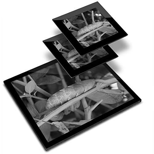 Mantel individual de cristal de 20 x 25 cm y 2 posavasos de 10 x 10 cm – BW – Death's Head Caterpillar?, Hawkmoth Workplace/mesa/comedor/felpues/lavable al agua #36810