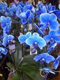 Virtue Schöne organische blumensamen 120 samen/tasche seltene orchidee samen bonsai blumensamen natürliche wachsen, anlage für hausgarten einfach zu wachsen 2
