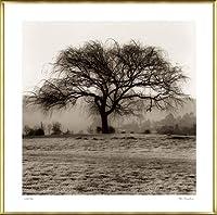 ポスター アラン ブラウステイン Willow Tree 額装品 アルミ製ベーシックフレーム(ゴールド)