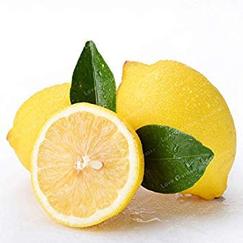 Potseed . 30 Pcs Citron Frais Juicing Comestible sain Exotique Tropical à Croissance Rapide d'ornement Citrus Limon Arbres fruitiers en Pot: 1