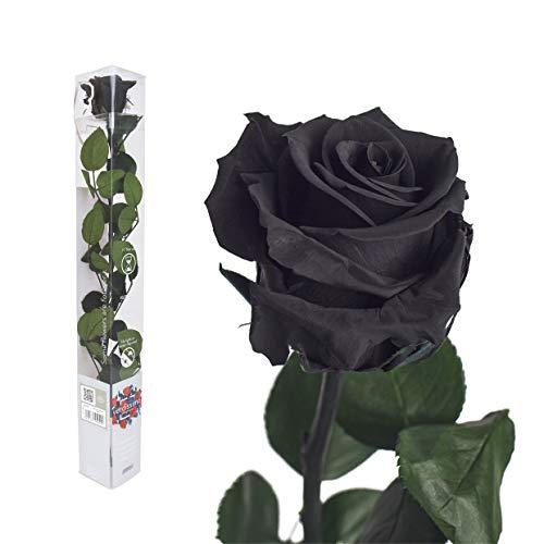 Versch. Farben/gefriergetrocknete Rosen in Geschenkverpackung - Naturprodukt Schwarz
