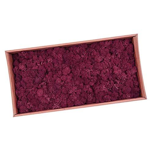 perfeclan Musgo Secado Flor Seca Preservada Decor - Vino Rojo