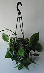 This Heart-Leaf Philodendron from Amazon is a great mood-boosting way to brighten up your winter garden blues!