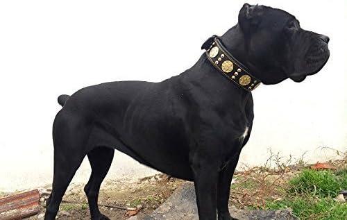 4.Bestia Maximus Genuine Leather Dog Collar