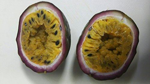 冷凍 フルーツ パッションフルーツ 500g ( 7-9個 ) 業務用