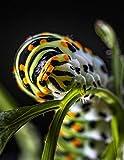 Notebook: swallowtail caterpillar butterfly garden butterflies
