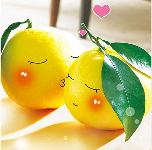 Bloom Green Co. 50 nains Lemon Tree Seeds - plantes d'extérieur, bricolage jardin Bonsai, odorants: 3