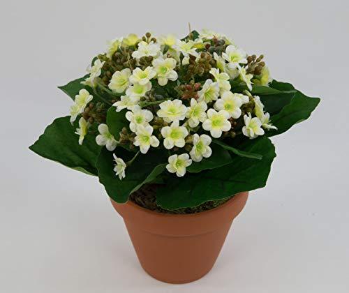 Kalanchoe 22cm weiß-Creme im Topf LM Kunstpflanzen Kunstblumen künstliche Blumen Pflanzen Flammendes Käthchen