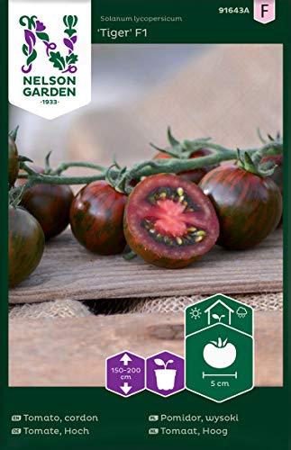 Tomatensamen Tiger F1 - Nelson Garden Samen für Gemüsegarten - Tomaten Saatgut (4 Stück) (Einzelpackung)