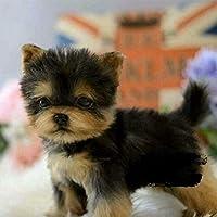 リアルなYorkie犬シミュレーションおもちゃの犬子犬リアルなぬいぐるみのコンパニオンおもちゃペット犬手作り…