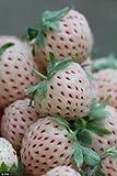 100blanco Alma fresa Fragaria vesca frutas flores bayas semillas * peine S/H
