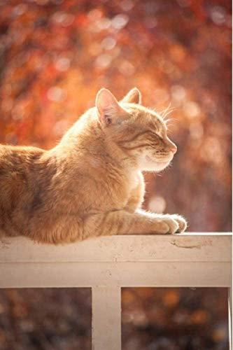 Jkykpp Ölgemälde, digital, kleine Katze, Orange Bronzer, 40 x 50 cm