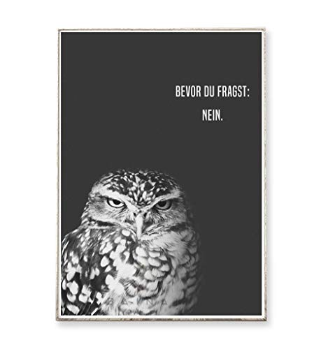 Kunstdruck Poster Bild GRUMPY OWL: NEIN -ungerahmt- Typografie Vogel Eule skandinavisch nordisch