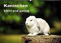 Kaninchen klein und putzig (Wandkalender 2022 DIN A2 quer): Wundervolle Bilder von suessen Kaninchen, wie das Loewenkoepfchen, der Zwergwidder und das Hauskaninchen. (Monatskalender, 14 Seiten )