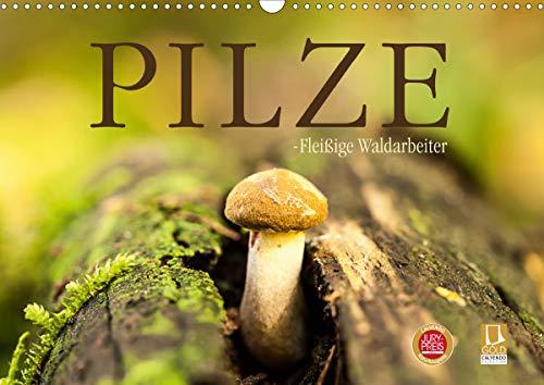 Pilze - fleißige Waldarbeiter (Wandkalender 2021 DIN A3 quer)