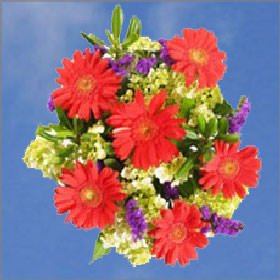GlobalRose Specials Valentine's Day Bouquets from Globalrose