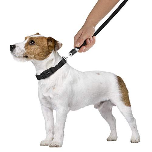 GOLEYGO Hundeleine & Halsband - Schwarz - Größe S-M | innovatives Magnet-Klick-System mit Kugelstift, unter Vollast lösbar | für Hunde bis max. 40 kg | Leinenlänge 120-200 cm