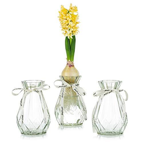 Vasi in Vetro Trasparente per Fiori con Corda di Seta, 3 Pezzi Moderni Vasi di Giacinto Vaso Bocciolo di Avocado per Pianta Idroponica Narciso per La Decorazione del Davanzale Interno