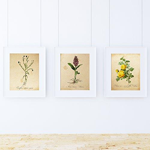 Pack de láminas Sense. Posters con imágenes de botánica. Decoración de hogar. Láminas para enmarcar. Papel 250 Gramos