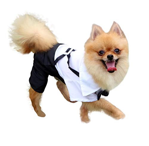 QiCheng & LYS Esmoquin Perro, Ropa de Chihuahua Verano Camisa de Esmoquin Formal con Traje de Corbata Negra (L)