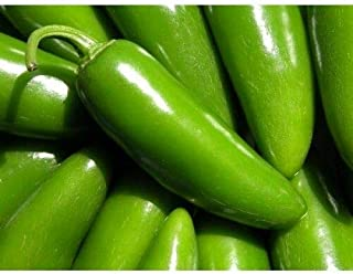 HIGH Germination Seeds ONLY NOT Plants: Vegetable Hot Chilli Pepper Tam Jalapeno (Mild) 30 Seeds UK Free P&P