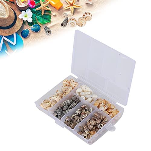 Conch Seashell, Seashell Stable para adornos, accesorios