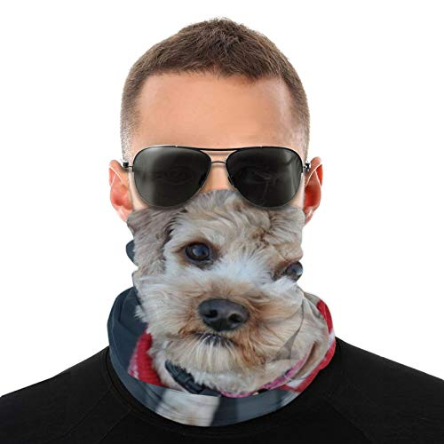 Windproof Winter Neck Gaiter Cover Neck Warmers Gaiters for Cold Weather Running Snowboard, Multifunctional Ear Face Mask Headband Scarf Cut Dog Puppy Beanie Cap