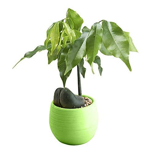 DOROCH 1 unid Ronda Plantilla Planta Maceta Creativo Colorido sembrador Hecho a Mano Escritorio Flor macetas Oficina jardín guardería decoración (Color : Green)