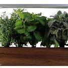 ēdn | Intelligent Indoor Gardens