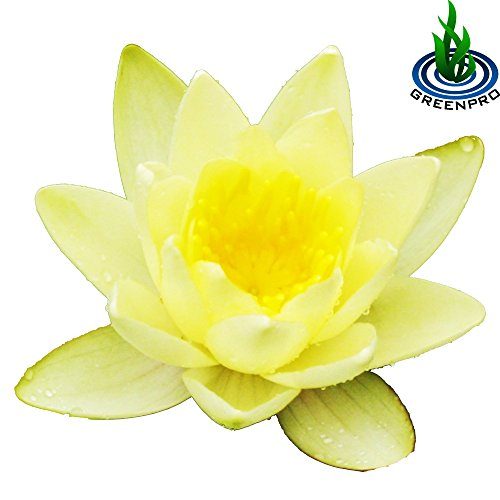 Best Summer Flower -Gloriosa Lily