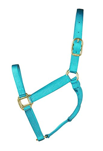 Hamilton 1-Inch Nylon Quality Halter for 800 to 1100-Pound Horse, Average, Ocean Blue