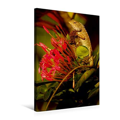 Premium textiel canvas 50 cm x 75 cm hoog, een motief uit de kalender Agamen - echsen uit vervlogen tijd | muurschildering, afbeelding op spieraam. Calotes versicolor (CALVENDO dieren);Calvendo dieren